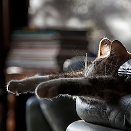 ☼ ☼ ☼  by Tanie Blue - Animals - Cats Portraits ( cat, family, 5dii, sleeping, tanieblue )