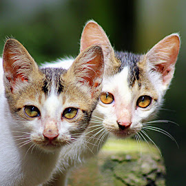 by Kanchan D - Animals - Cats Kittens