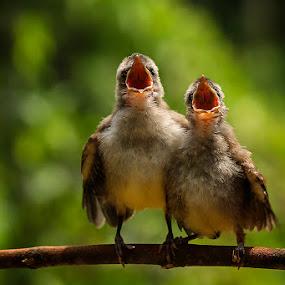 wowowow!!!!! by Alonk's Roby - Animals Birds (  )