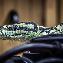 Focussed by Michael Jones - Animals Reptiles