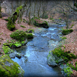 trees and river by Cosmin Popa-Gorjanu - Nature Up Close Trees & Bushes ( mosses, dry leaves, trees, rocks, river )