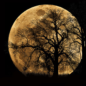 10 Ob Utp full moon tree 900.jpg
