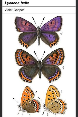 Butterflies of NW Europe