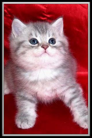 玩免費休閒APP 下載Cat translator app不用錢 硬是要APP