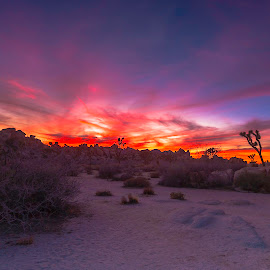 Joshua Tree Sunset, Hidden Valley by Patrick Flood - Landscapes Mountains & Hills ( canon, photosbyflood, national park, colorful, sunset, california, joshua tree, hidden valley, landscape, twenty-nine palms )