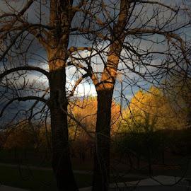 Non smettere mai di Meravigliarti ...~.~.. Dolce pomeriggio :) qui Da noi le otto e trenta del mattino... 5 gradi:( vento pazzesco!!!! E pioggia solo abbastanza per dare fastidio:))))) mille baci in arriva da Montreal .Canada :))))))) con affetto <3 by Rosanne Arancio - City,  Street & Park  City Parks