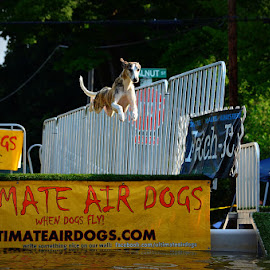 Ultimate Air Dogs by Kourtney Monroe - News & Events Entertainment