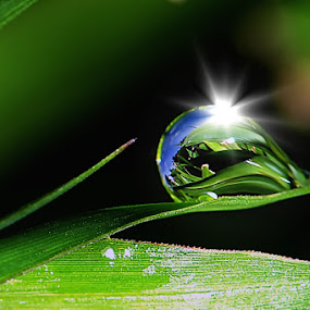 by Sengkiu Pasaribu - Nature Up Close Natural Waterdrops