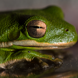 by Robert Bennett - Animals Amphibians