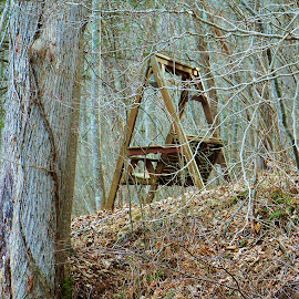woodland swing by Delores Mills - Artistic Objects Furniture ( relax, tranquil, relaxing, tranquility,  )