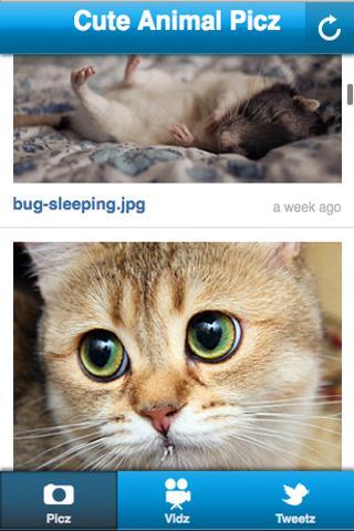 Cute Animal Picz