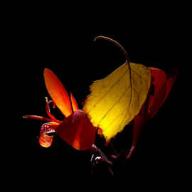 Dance with autumn by Jurijs Ratanins - Instagram & Mobile Android ( mobilography, leave, nature, flowers, light )