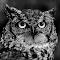 Owl 1125 3 bw.jpg