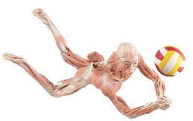 bodies-the-exhibition-i