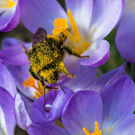 My garden. by Anna Klobuch - Nature Up Close Hives & Nests ( bee.flower. )