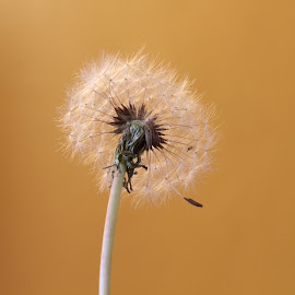 by Carina Garcia - Novices Only Macro
