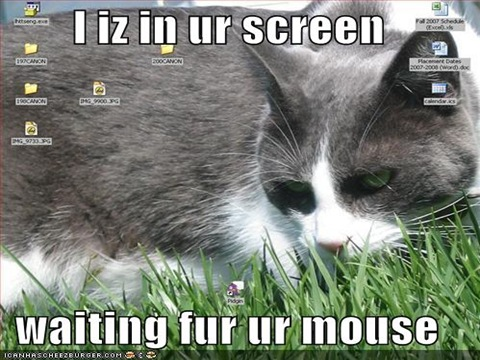 funny-pictures-cat-screen-mouse
