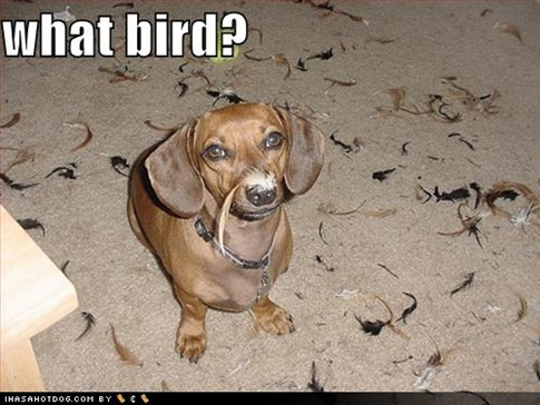 funny-dog-pictures-what-bird