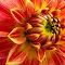 thumb_IMG_0181_1024.jpg