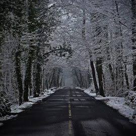 Winters Lane by Neil Greenhalgh - Landscapes Weather ( winter, snow, road, lane )