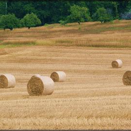 by Randy Payne - Landscapes Prairies, Meadows & Fields