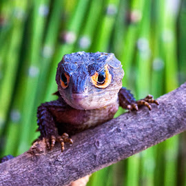 by Dedi Wahyudi - Animals Reptiles
