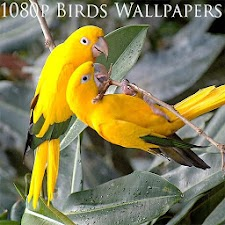 1080p Birds Wallpapers