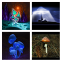 Mushroom Magic Live Wallpaper icon