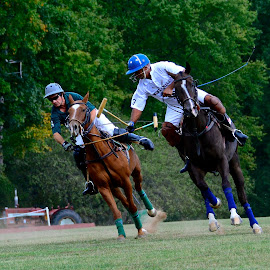 Crossing Mallets by Nina VanDeleur - Sports & Fitness Other Sports ( polo )