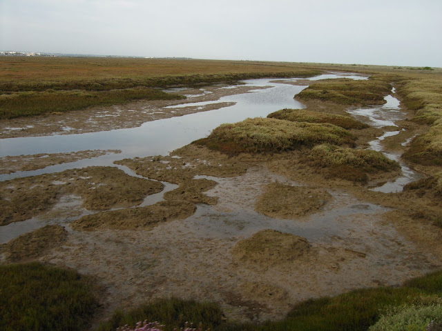 A view of the salt marshes in the Ria Formosa national park.