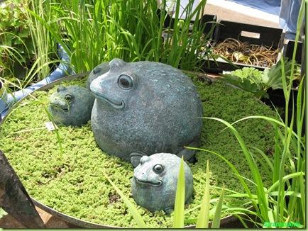 piante acquatiche rospi-simpatici