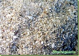 sabbia di mare