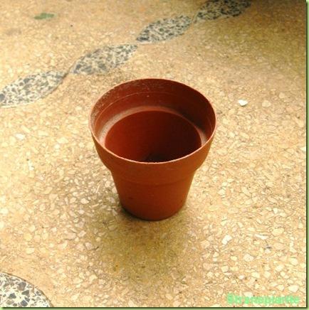 piccolo vaso plastica cactus