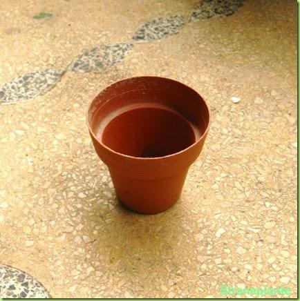Quali vasi comprare per le piante grasse for Vasi per semina