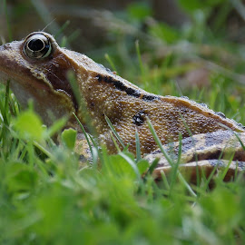 by Clayton Warby - Animals Amphibians (  )