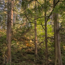 Sunset in the woods by Eva Krejci - Nature Up Close Trees & Bushes ( stairs, sunset, trail, path, trees, forest, tall )