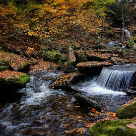 Serenity Now by Steven Maerz - Landscapes Waterscapes ( #fall#autumn#waterfall#rickettsglen#stream )