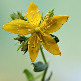 Macro flower by Bob Ward - Nature Up Close Other Natural Objects