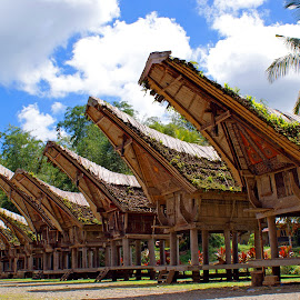 alang  by Hartono Wijaya  - Buildings & Architecture Homes ( home, toraja, building, paddy field, rice, barn, indonesia, traditional, tourism, architecture )