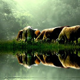 kambing.. by Abus  Salim - Digital Art Animals