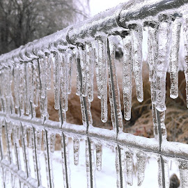 Ice on garden fence by Marc Wahrer - Instagram & Mobile Android ( fence, cold, ice, icicles, garden )