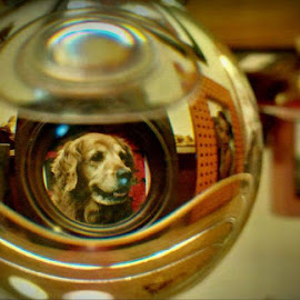 Penny through the Looking Ball by Cecilia Sterling - Artistic Objects Other Objects