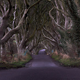 by Oliver Almazan - Landscapes Travel ( ireland, dark hedges, landscape )