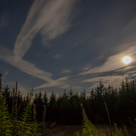 Moonshine by Ian Thompson - Landscapes Cloud Formations ( nobody, skyline, moon, wales, blue moon, landscape, glow, united kingdom, sky, tree, cold, nature, pine tree, no people, dark, cloudy, astrophotography, pine, darkness, night sky, clouds, uk, nightime, forest, moonlight, pure, planets, stars, cloud, moody, trees, night, full moon )
