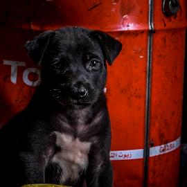 Junkyard Pup by Dave Lerio - Animals - Dogs Puppies (  )