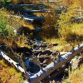 Alder Creek by Samantha Linn - Landscapes Prairies, Meadows & Fields