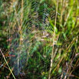 Spider web by Stanislav Horacek - Nature Up Close Webs