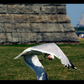 Fly Away by Jason Brooks - Animals Fish ( bird, flight, battle, fish, food, new york city, new york, fly away )