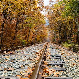 Train tracks in the Autumn by Danielle Wells - Landscapes Forests ( train tracks, nature, autumn leaves, new england, autumn, autumn colors, white mountains,  )