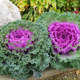 Edible Plants! by Annette Long-Soller - Nature Up Close Gardens & Produce ( purple, green, plants, full bloom, edible )